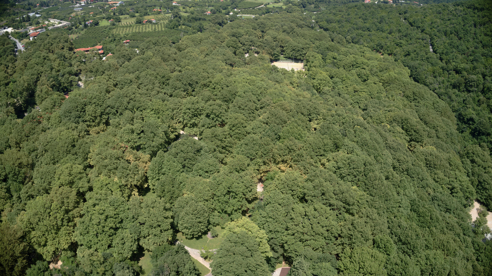 Saint Nicholas' Grove Naoussa from the air in summer